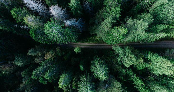 Svezia e il rapporto con la natura: allemansrätten