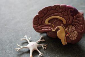 La stimolazione cerebrale profonda (DBS)