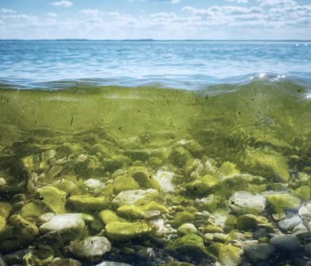 Il futuro nelle alghe